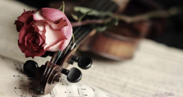 """""""Скрипка и роза"""" фото. Скачать обои"""